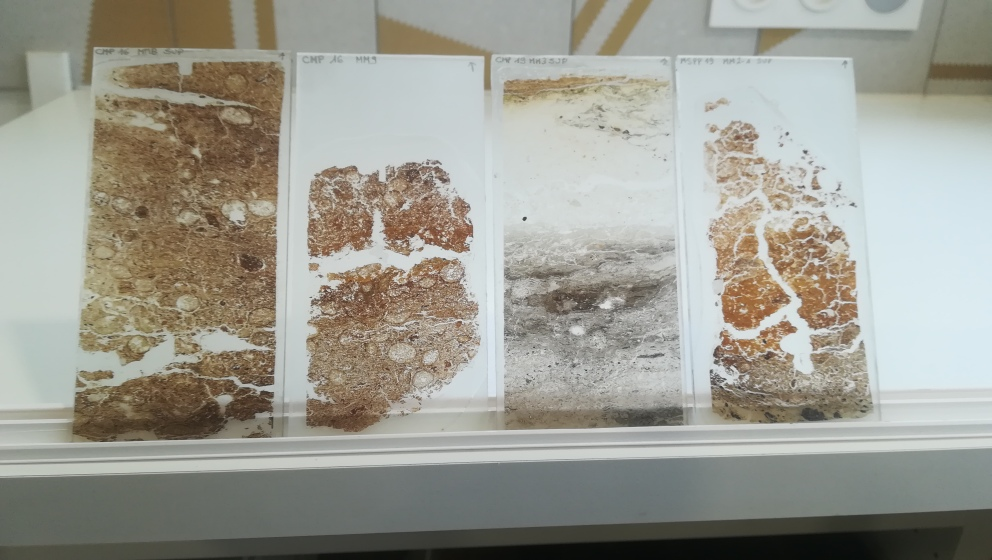 Thin sections from modern dung